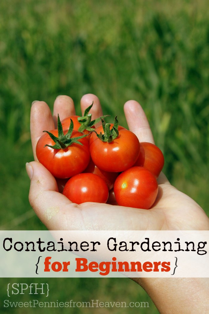 Container gardening archives sweet pennies from heaven - Best vegetables for container gardening ...